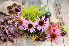 Coneflowers and dill in mortar, vial with essential oil Royalty Free Stock Photos