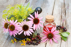 Coneflowers in mortar and vial with essentia oil in garden Royalty Free Stock Photos