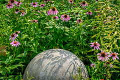 Coneflowers and Sphere Royalty Free Stock Images