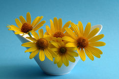 Coneflowers in a vase Royalty Free Stock Photos