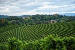 Conegliano vineyard at daylight royalty free stock image