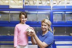 Conejillo de Indias auxiliar de la muchacha de las ventas que muestra en tienda del animal doméstico Foto de archivo