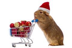 Conejillo de Indias con el carro de la compra de la Navidad Imagenes de archivo