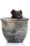 Conejillo de Indias en crisol Imagenes de archivo