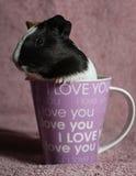Conejillo de Indias en taza de café rosada Fotos de archivo libres de regalías