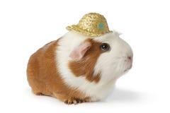 Conejillo de Indias lindo de la señora con el sombrero fotos de archivo
