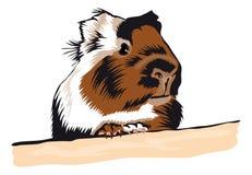 Conejillo de Indias que mira alrededor Fotografía de archivo libre de regalías