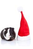 Conejillo de Indias y un sombrero de la Navidad imagenes de archivo