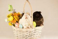 Conejillos de Indias Pascua feliz con los huevos Foto de archivo