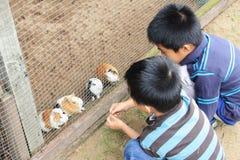 Conejillos de Indias que introducen Foto de archivo