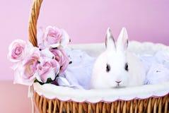 Conejito blanco en cesta imagen de archivo