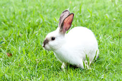 Conejito blanco en el conejo del blanco de la yarda Imágenes de archivo libres de regalías