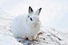 Conejito blanco lindo Imágenes de archivo libres de regalías