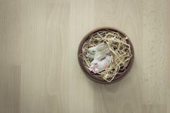 Conejito de dos pascua en una cesta Fotografía de archivo