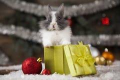 Conejito de la Navidad, sombrero del rojo del bebé de santa Foto de archivo