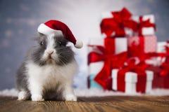 Conejito de la Navidad, sombrero del rojo del bebé de santa Imagenes de archivo