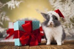 Conejito de la Navidad, sombrero del rojo del bebé de santa Fotos de archivo libres de regalías