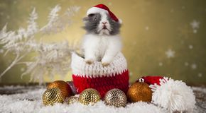 Conejito de la Navidad, sombrero del rojo del bebé de santa Fotografía de archivo