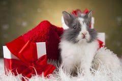 Conejito de la Navidad, sombrero del rojo del bebé de santa Imagen de archivo libre de regalías