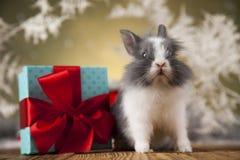 Conejito de la Navidad, sombrero del rojo del bebé de santa Imagen de archivo
