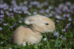 Conejito de la primavera fotos de archivo libres de regalías