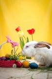 Conejito de pascua blanco con los huevos de Pascua Imagen de archivo