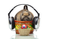 Conejito de pascua con los auriculares y el huevo de Pascua Fotografía de archivo libre de regalías