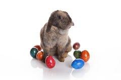 Conejito de pascua con los huevos coloridos Imágenes de archivo libres de regalías