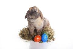 Conejito de pascua con los huevos coloridos Imagen de archivo libre de regalías