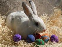 Conejito de pascua con los huevos coloridos Imagen de archivo