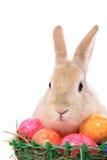 Conejito de pascua con los huevos de Pascua Fotografía de archivo