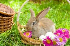 Conejito de pascua con los huevos en cesta Imagen de archivo libre de regalías