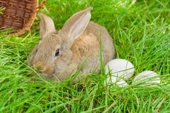 Conejito de pascua con los huevos en cesta Imagenes de archivo