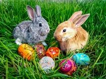 Conejito de pascua con los huevos en hierba verde Fotos de archivo libres de regalías
