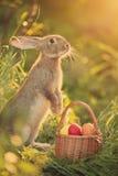 Conejito de pascua con una cesta de huevos Conejito de pascua feliz en una tarjeta Imagen de archivo