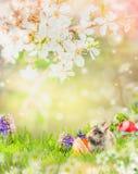 Conejito de pascua en jardín de la primavera con el flor y los huevos de Pascua Foto de archivo