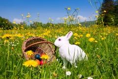 Conejito de pascua en prado con la cesta y los huevos