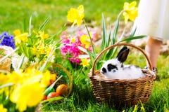 Conejito de pascua en prado con la cesta y los huevos Fotos de archivo