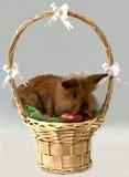 Conejito de pascua en una cesta Imagenes de archivo