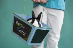 Conejito de pascua en una cesta Fotografía de archivo libre de regalías