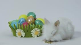 Conejito de pascua feliz en el fondo blanco con los huevos coloreados en jerarquía almacen de video