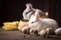 Conejito de pascua lindo con los huevos coloreados fotografía de archivo