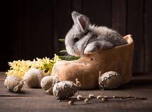 Conejito de pascua lindo con los huevos coloreados imagen de archivo