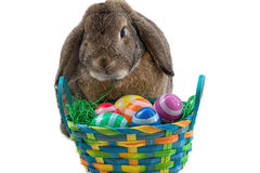 Conejito de pascua y huevos de Pascua Foto de archivo libre de regalías