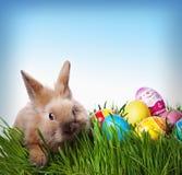 Conejito de pascua y huevos de Pascua fotografía de archivo libre de regalías