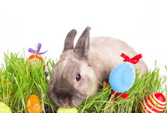 Conejito de pascua y huevos de Pascua en hierba verde Fotografía de archivo libre de regalías