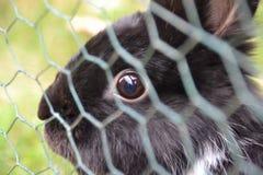 Conejito del animal doméstico detrás de una cerca de la malla Fotos de archivo