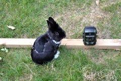 Conejito del animal doméstico detrás de una cerca de la malla Fotografía de archivo libre de regalías