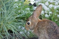 Conejito del bebé que come las flores en el jardín Foto de archivo