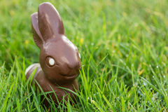 Conejito del chocolate en la hierba foto de archivo